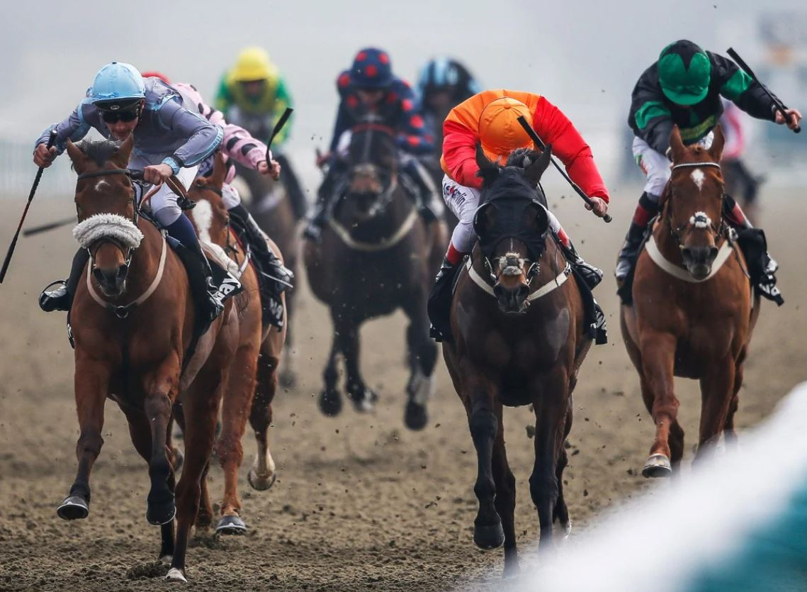 June 2020 horse racing tips